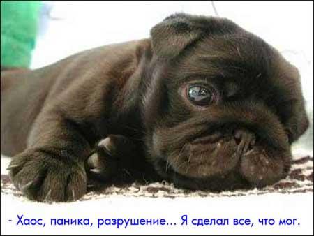 http://www.anafor.ru/pics/animals/image/056.jpg