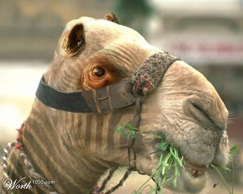 Фотографии животных и людей фотошоп